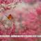 Elena Gheorghe: le migliori frasi dei testi delle canzoni