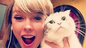 Taylor Swift su Instagram con il gatto
