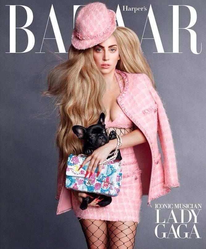 Lady Gaga in completo rosa e il cane Asia