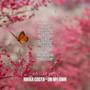 Nikka Costa: le migliori frasi dei testi delle canzoni