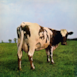Atom Heart Mother (Remastered)