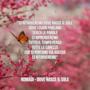 Nomadi: le migliori frasi dei testi delle canzoni