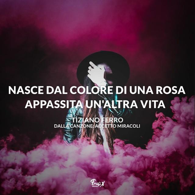 Nasce dal colore di una rosa appassita un'altra vita