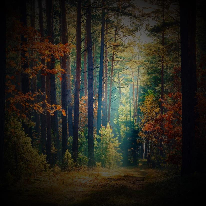 Copertina frasi sul silenzio del bosco