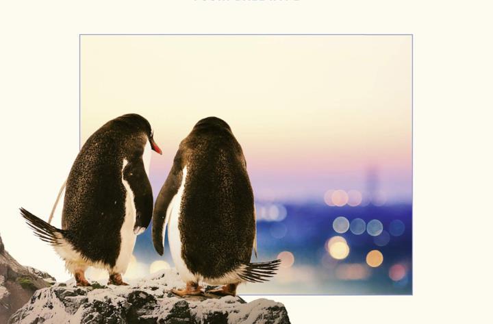Copertina Frasi Pinguini Tattici Nucleari