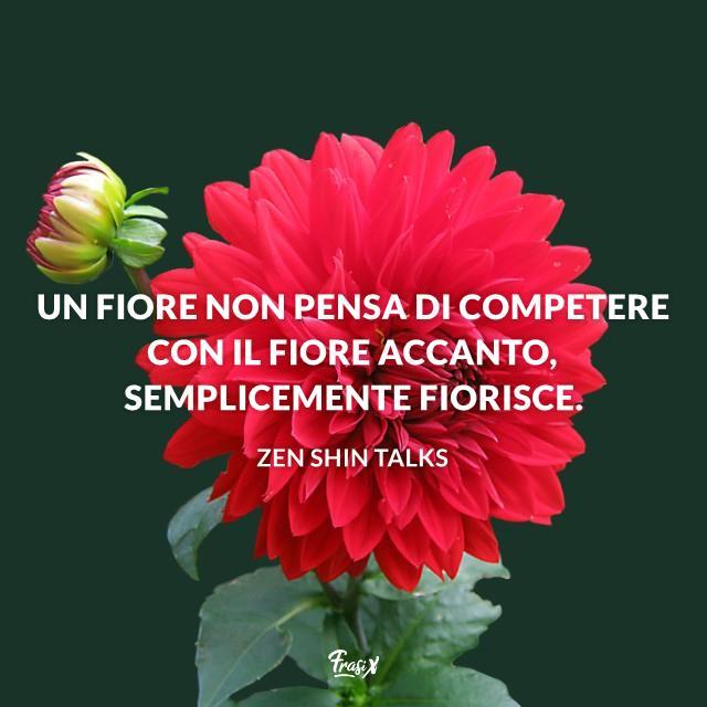 Un fiore non pensa di competere con il fiore accanto, semplicemente fiorisce.