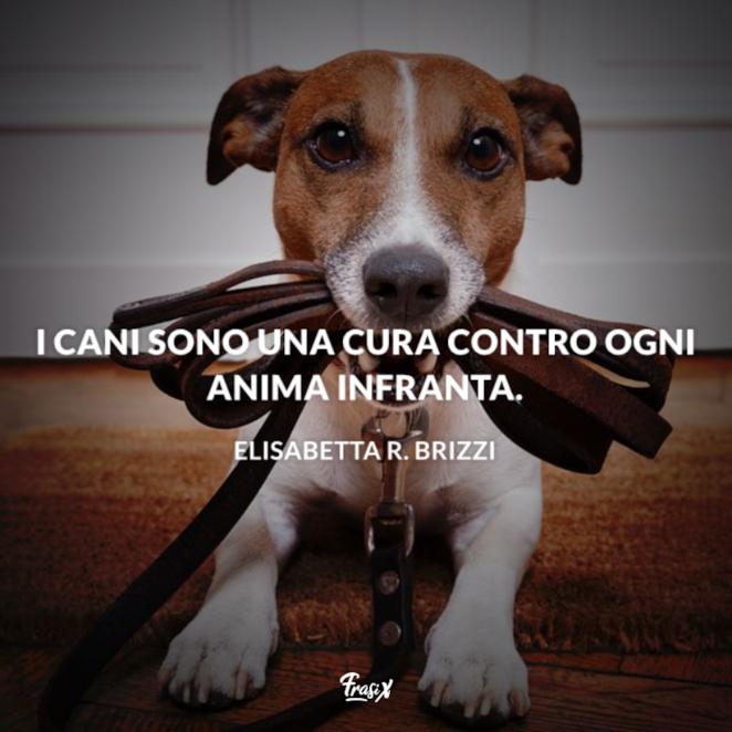 Immagine con citazione elisabetta r. brizzi per aforismi sugli animali cane