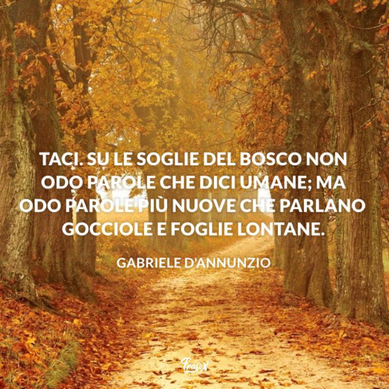 Immagine con citazione D'Annunzio per frasi sul silenzio del bosco