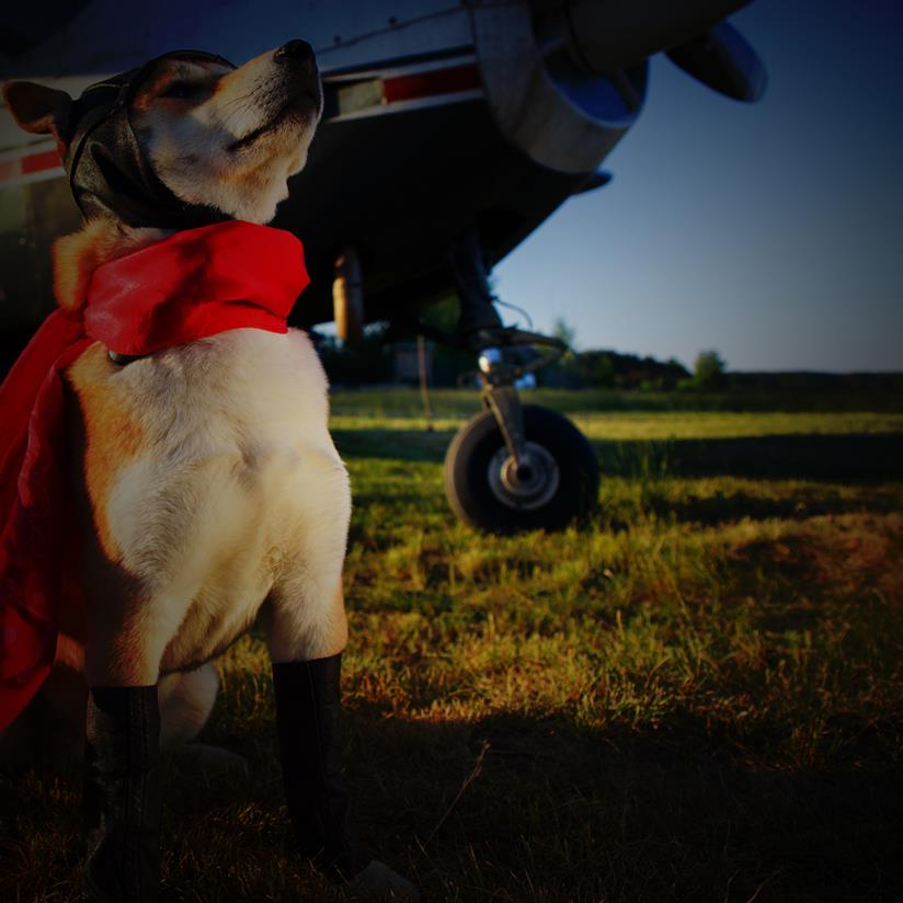 Copertina aforismi sugli animali cane