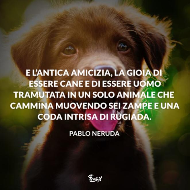 Immagine con citazione neruda per aforismi sugli animali cane
