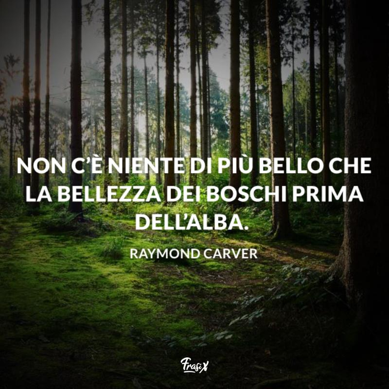 Immagine con citazione Carver per frasi sul silenzio del bosco