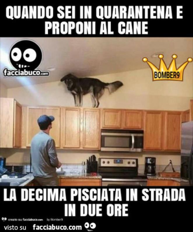 Immagini divertenti quarantena meme sul cane