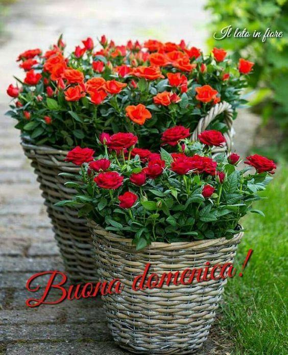 Un cesto di rose