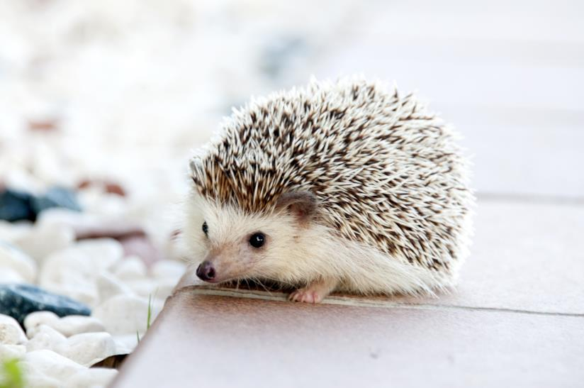 Copertina aforismi sugli animali