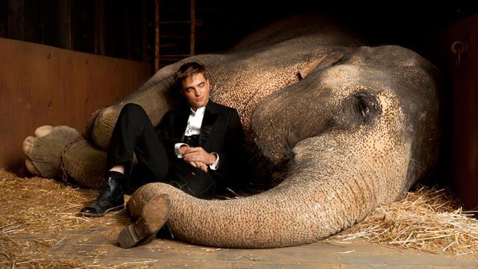 Una scena di Come l'acqua per gli elefanti con Pattinson e l'elefante