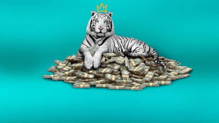 La tigre bianca poster