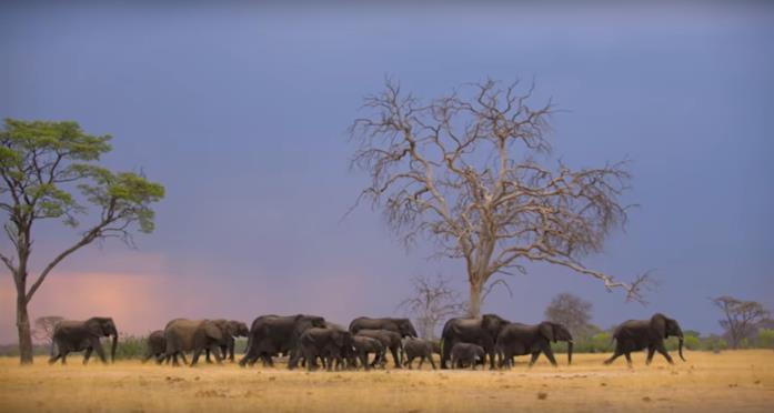 Una scena di Elephant