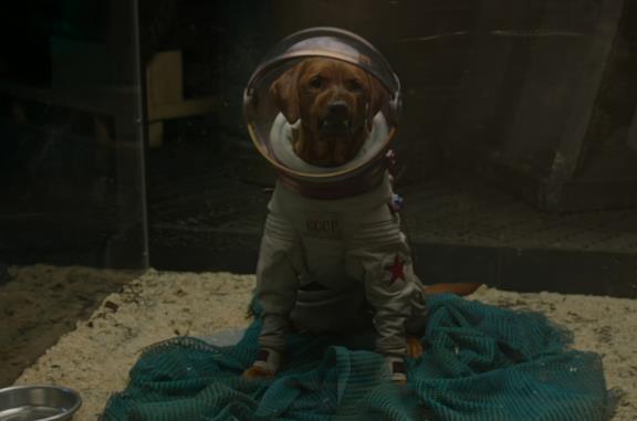 Chi è Cosmo, il cane che compare in Guardiani della Galassia?