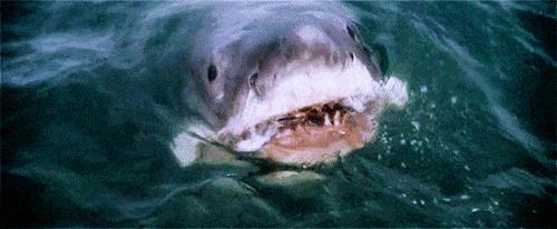 Lo squalo nel film di Steven Spielberg