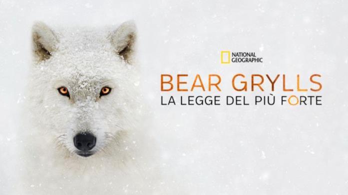 Bear Grylls la legge del più forte