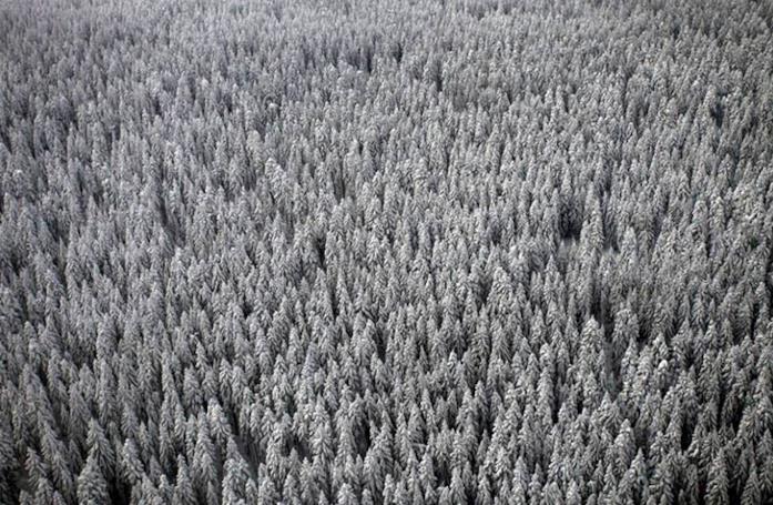 Game 2: Winter, la foresta ghiacciata della Siberia