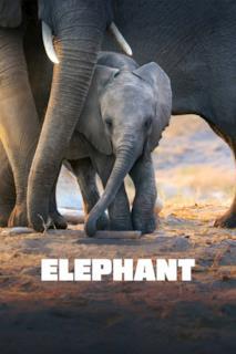Poster La Famiglia di Elefanti