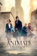 Poster Animali fantastici e dove trovarli