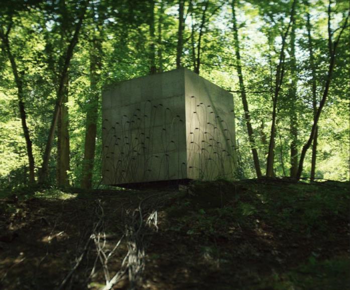 Il cubo del Quantum nel folto della foresta