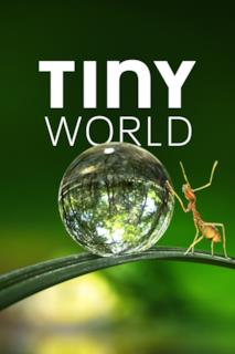 Poster Tiny World