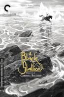 Poster Black Stallion
