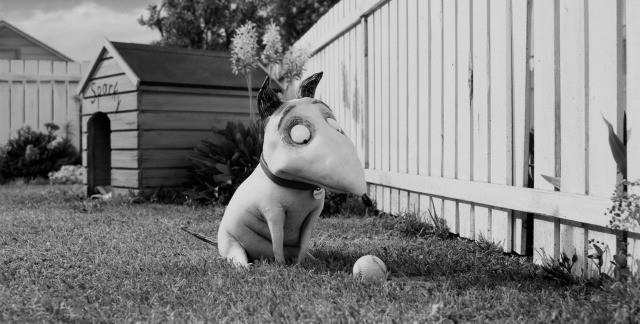 Sparky davanti a una pallina da golf