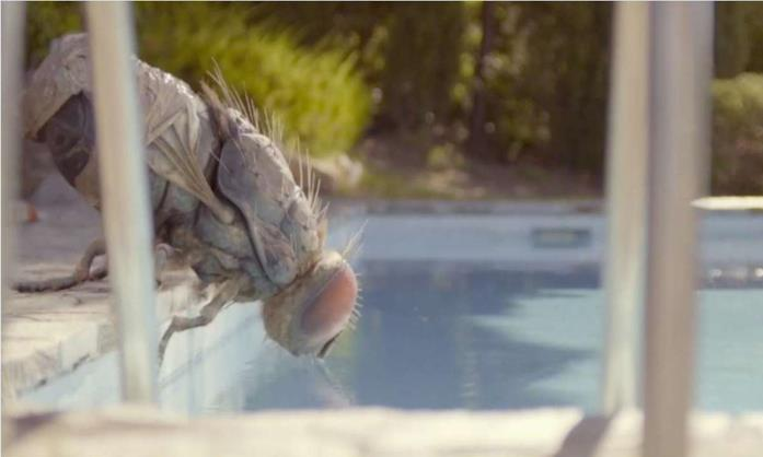 Una mosca gigante si disseta presso una piscina