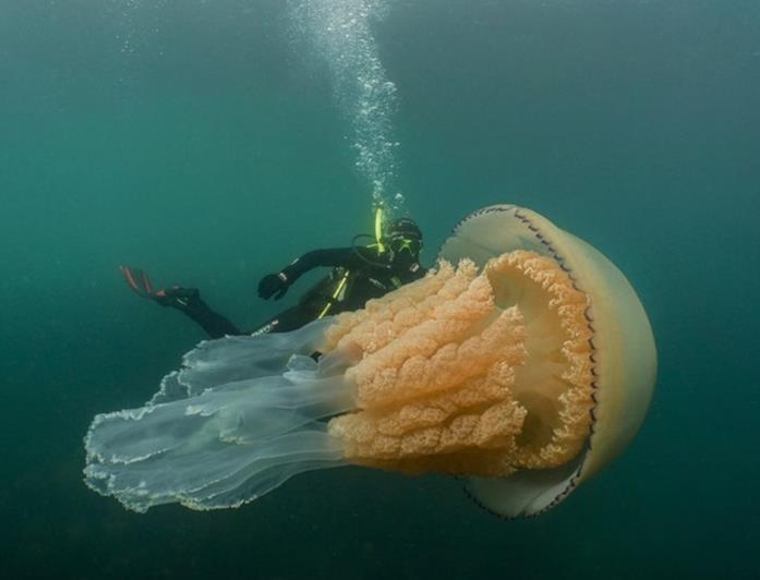 La biologa marina accanto all'enorme creatura
