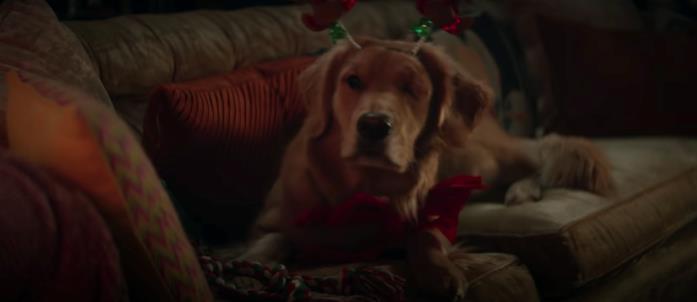 Il cane di Kate