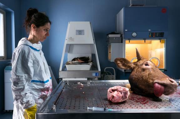 Donatella Finocchiaro osserva la testa di una mucca morta