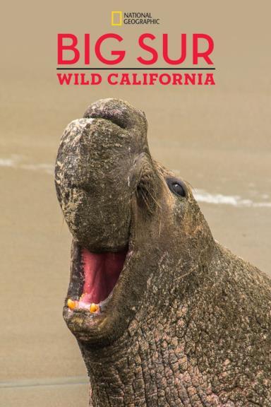 Poster Big Sur-Wild California