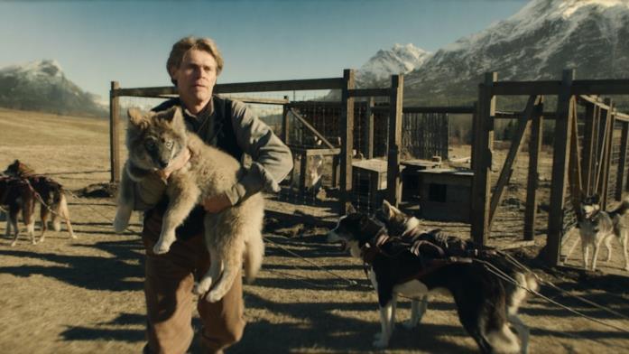 Togo è un cucciolo in alcuni flashback del film