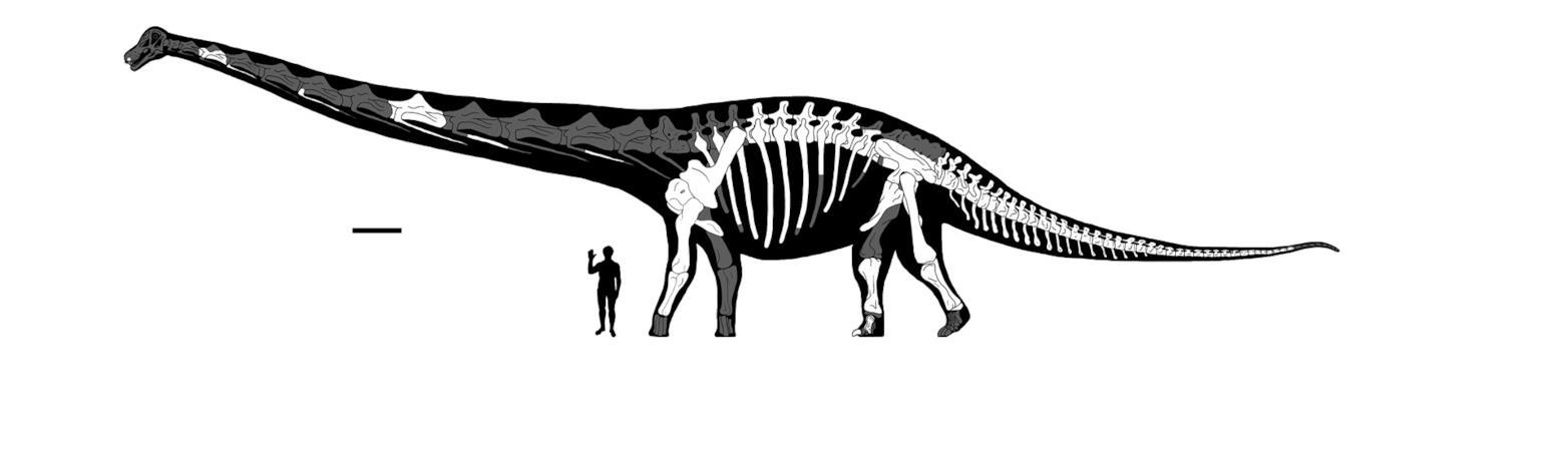 Dimensioni del Dreadnoughtus