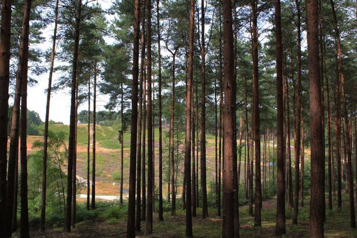 Bourne Wood, Farnham