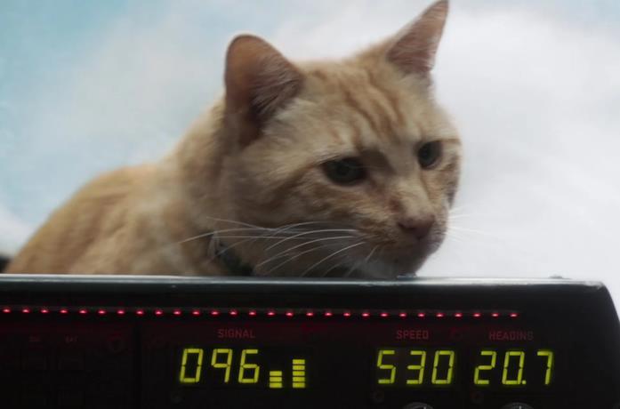 Goose, la gatta di Captain Marvel