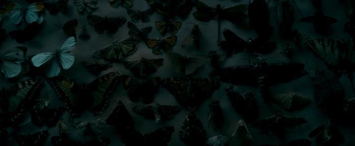 Un quadro di farfalle