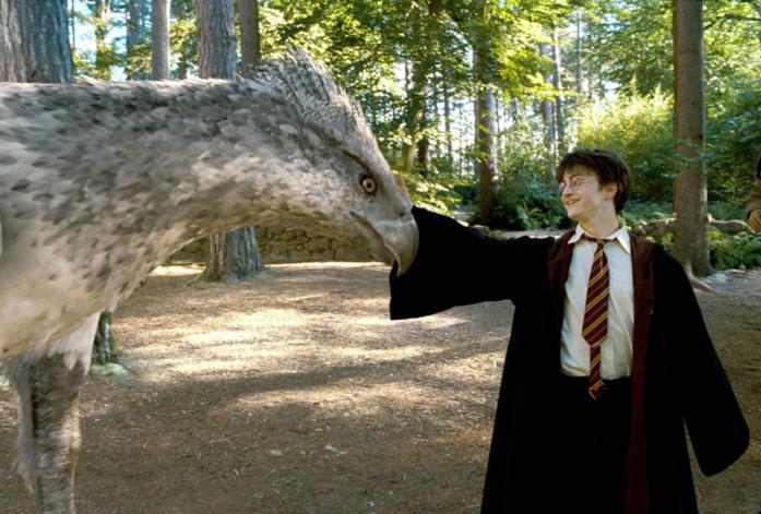 Harry Potter accarezza Fierobecco
