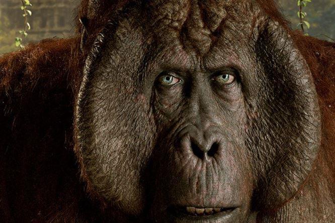 scimmia King Louie