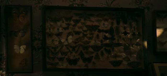 Una parete piena di farfalle