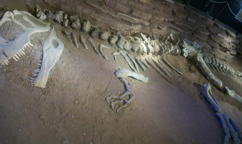 Il fossile di un Giganotosaurus