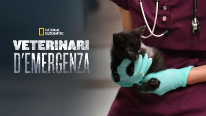 Veterinari d'emergenza