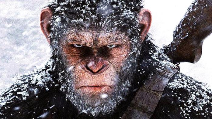 Lo scimpanzé Cesare sotto la neve con una espressione arrabbiata
