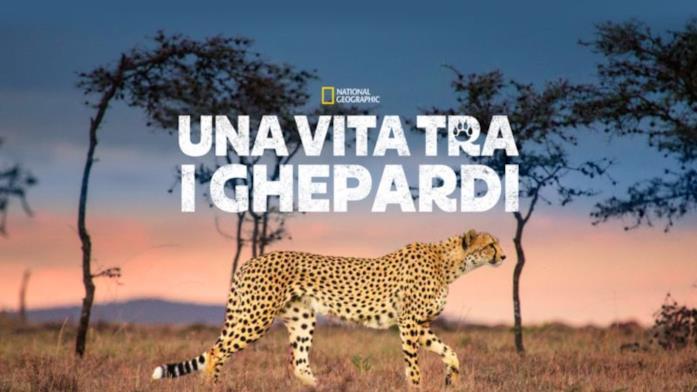 Una vita tra i ghepardi
