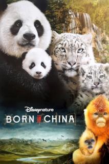 Poster Nati in Cina