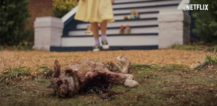 Un gatto morto